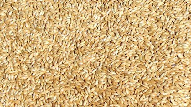 Canary Seeds: the Newest Item to Enter the Gluten-free Market